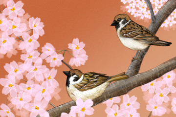 Fototapeta Orientalny Hand drawn illustration of Eurasian tree sparrows sitting among Japanese Yoshino cherry flowers