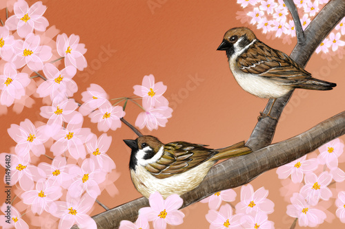 Hand drawn illustration of Eurasian tree sparrows sitting among Japanese Yoshino cherry flowers - 111496482
