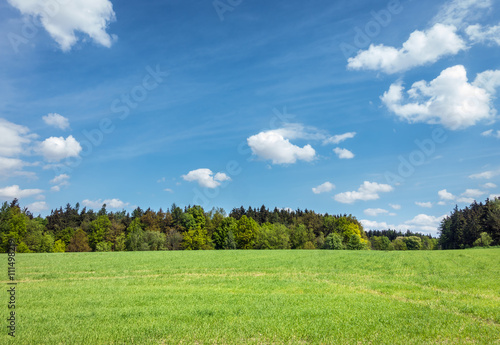 Foto op Canvas Pistache Spring or summer landscape – meadow, forest and sky