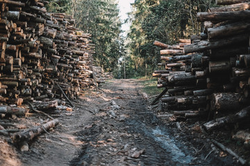 Road through forest lined with timber