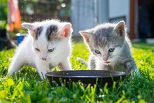 Cute Cats Drink Milk