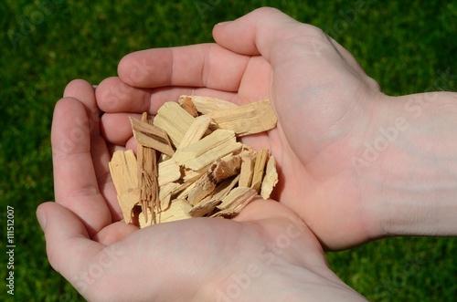 Fotografia, Obraz  Hands Holding Wood Chips