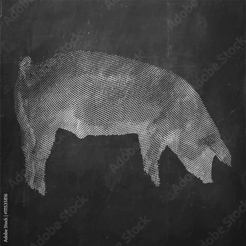 Pig. Farm animal. Vintage engraved illustration on clean background.