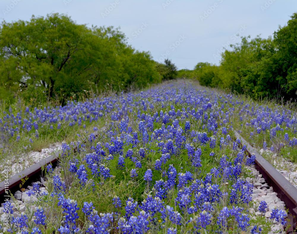 Photo Art Print Bluebonnet Railroadtexas Bluebonnet Flowers