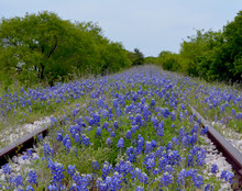 Bluebonnet Railroad/Texas Blue...