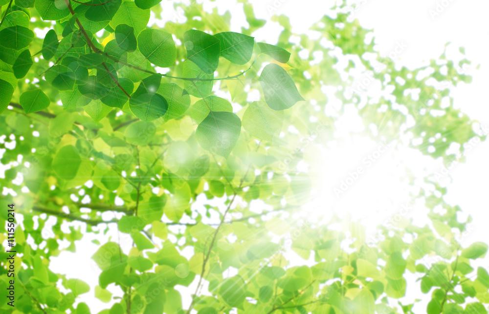 Fototapeta 新緑の季節 光の輝き