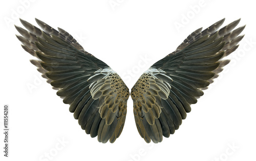 Poster Aigle Wings : bird: pinion:wings air:fly Isolated on white