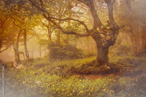 Misty forest with fog