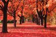 Leinwandbild Motiv color autumn forest