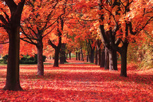 Color Autumn Forest
