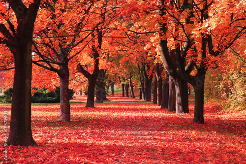 Foto op Aluminium Rood color autumn forest