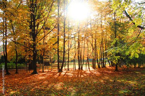 Papiers peints Foret brouillard color autumn forest