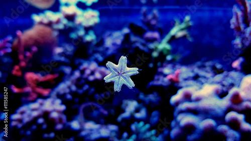 Photo  Macro shot on little starfish
