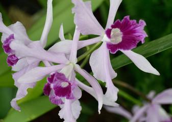 Fototapeta Storczyki Orchid