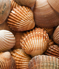 Close Up Of A Group Of Clam Sh...