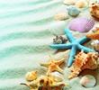 Seashells on a summer beach