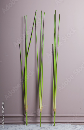 Fotomural Artificial sedge near wall
