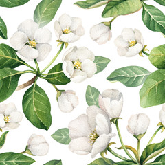Fototapeta Seamless pattern with watercolor illustrations of apple flowers