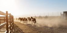 Horses Running In The Corral.