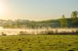 morning fog. around the lake grow birch .