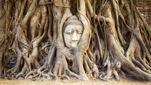Buddha Head In The Tree Roots ...