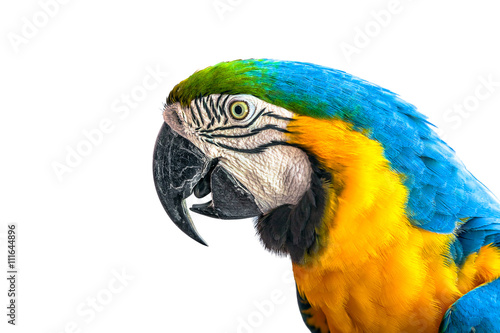 Аra parrot on a white background.