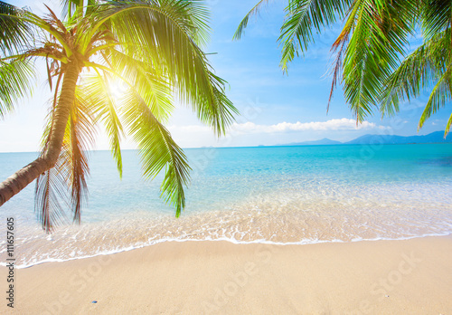 Palm and tropical beach Poster