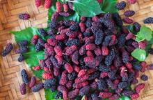 Fresh Mulberry In Threshing Basket
