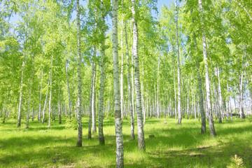 letni las brzozowy