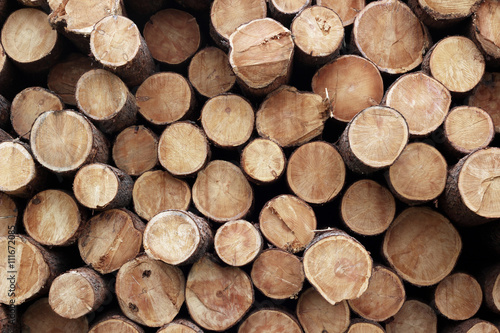 Fotografia  Pile of wood logs. Wood logs texture background