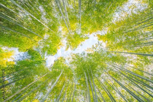 Bamboo forest at Adashinonenbutsu temple,tourism of kyoto,japan - 111673422
