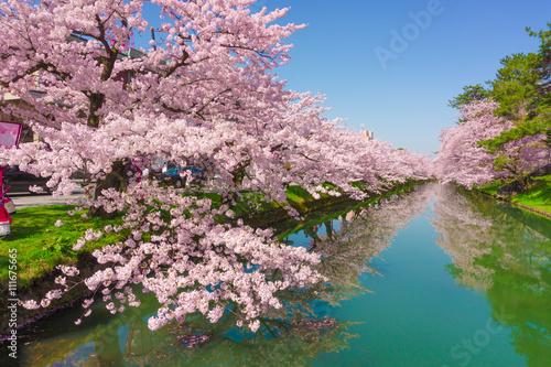 Foto op Plexiglas Kersenbloesem hirosaki park cherry brossom 弘前公園の桜