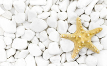 Starfish On The White Stones.