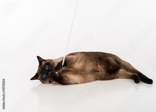 Fotografía  Siamese Cat lying on the white desk and playing with rope