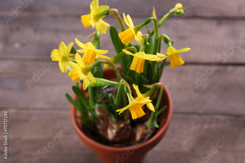 Papiers peints Narcisse Beautiful narcissus in pot on wooden background