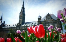 Tulips At Georgetown