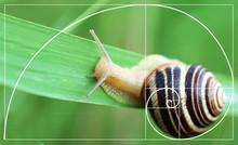 Illustration Of Golden Ratio In Nature. Fibonacci Pattern