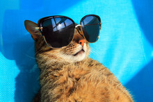 Funny Cat Wearing Sunglasses R...