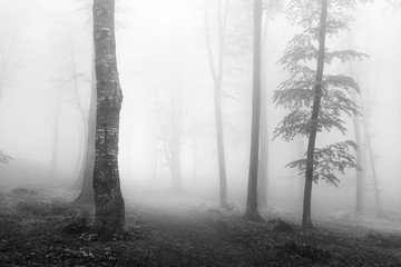 Dark trail into the fog