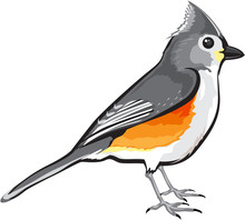 Tufted Titmouse Bird Vector Illustration Clip-art Graphic Design