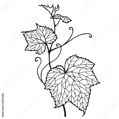 Leaf Vine Zen Tangle Doodle Floral Ornament Hand Drawn Zentangle