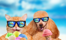 Cat And Dog Wearing Sunglasses Relaxing In The Sea Background. Red Cat And Dog Eats Ice Cream.