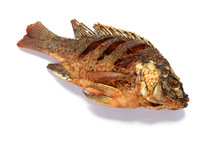 Fried Tilapia Fish Fried Isolated On White Background