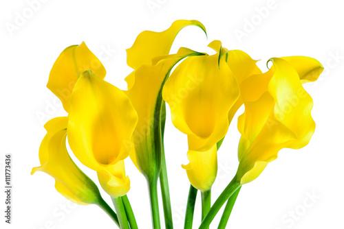 Fotografie, Obraz  flower yellow calla isolated macro