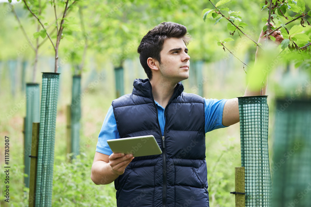 Valokuva  Forestry Worker With Digital Tablet Checking Young Trees