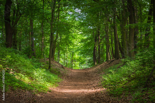 Path in the green forest in the sunlight