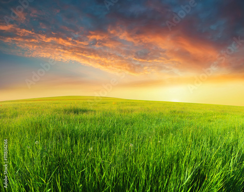 Photo Stands Melon Green field in the mountain valley. Beautiful summer landscape