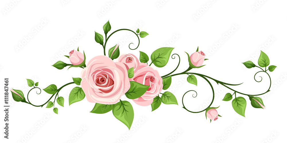 Fototapety, obrazy: Vector pink rose vine isolated on a white background.