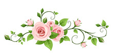 Vector Pink Rose Vine Isolated...