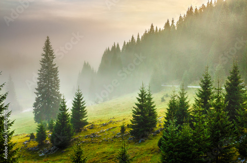 Staande foto Beige fir trees on meadow between hillsides in fog before sunrise